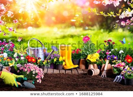 colorido · flores · jardín · herramientas · mesa · de · madera · aislado - foto stock © fantazista
