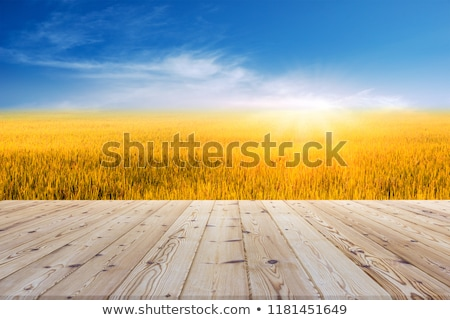 Wood background - can be used for display and montage your produ Stock photo © happydancing