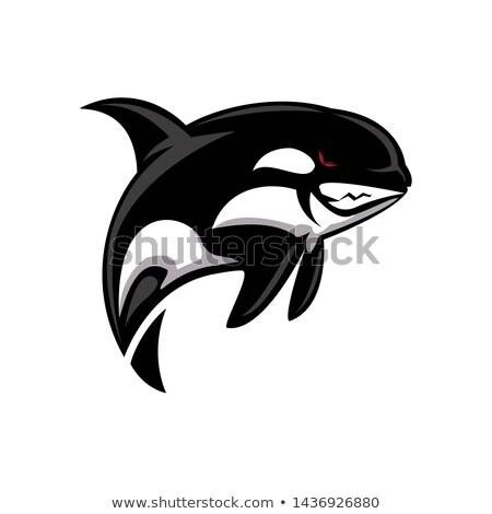 Gyilkos bálna matróz illusztráció utazás állat Stock fotó © adrenalina
