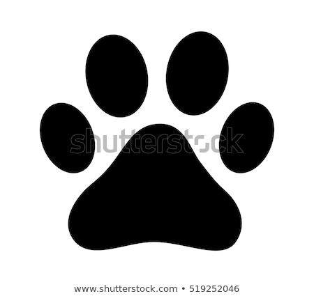 hayvan · ayak · izi · yeşil · düğme · köpek · imzalamak - stok fotoğraf © make
