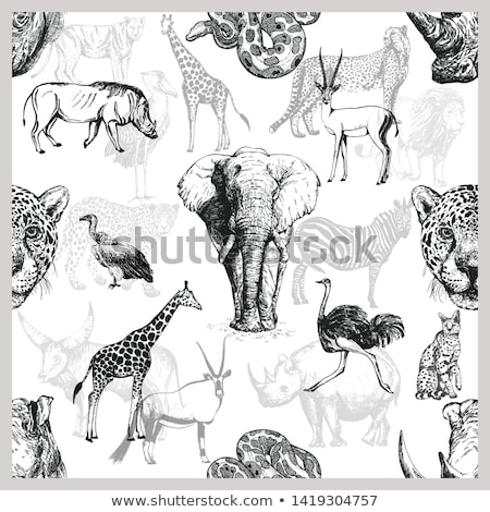 seamless background with wild animals stock photo © bluering