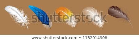 изолированный · белый · Перу · крыло · птица - Сток-фото © cidepix