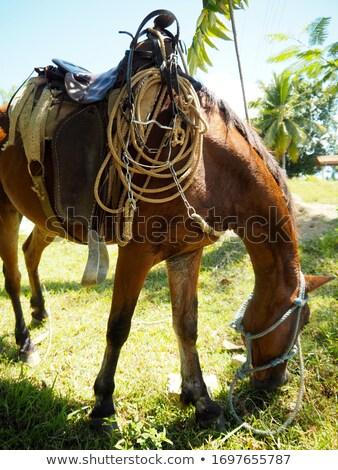 Farm animals on pasture on Trinidad countryside, Cuba Stock photo © CaptureLight