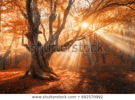 Landscape with autumn and spring foggy morning in the forest. Ye stock photo © TanaCh