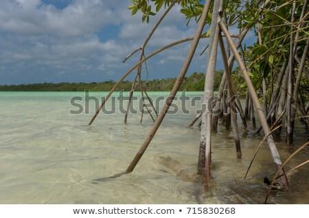 wood stick fence in tropical caribbean sea stock photo © lunamarina