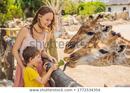 Happy young woman watching and feeding giraffe in zoo. Happy young woman having fun with animals saf Stock photo © galitskaya
