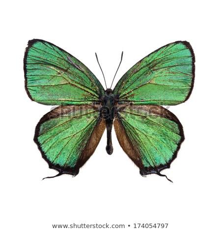 aquarela · azul · borboleta · verde · isolado - foto stock © Natalia_1947