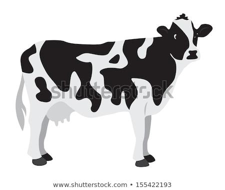 Koe permanente groen gras vector dier Stockfoto © robuart