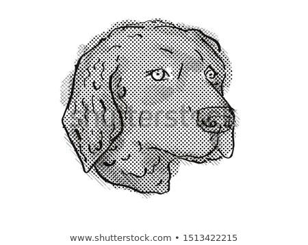 Curly-Coated Retriever Dog Breed Cartoon Retro Drawing Stock photo © patrimonio