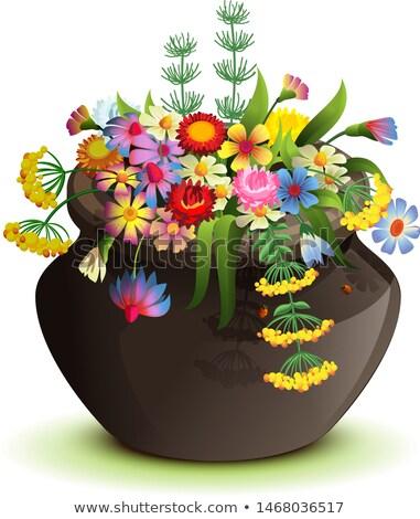 Black halloween pot with wildflowers. Cartoon illustration isolated on white Stock photo © orensila