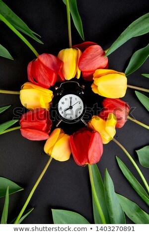 Alarm clock with red and yellow tulip around. Stock photo © Illia