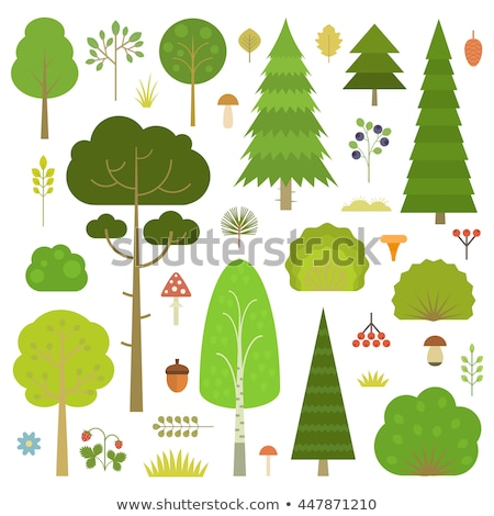 żołądź mech lasu zielone jesienią owoców Zdjęcia stock © tilo