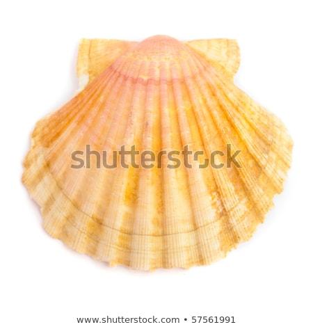 beach sand white pink shell macro summer closeup Stock photo © lunamarina