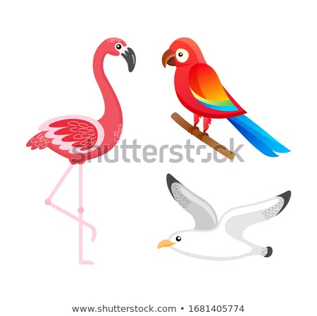 Flamingo and Ara Parrot, Fluing Seagull Birds Stock photo © robuart