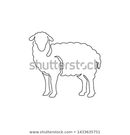 два · белый · овец · стилизованный · зеленый · луговой - Сток-фото © romvo