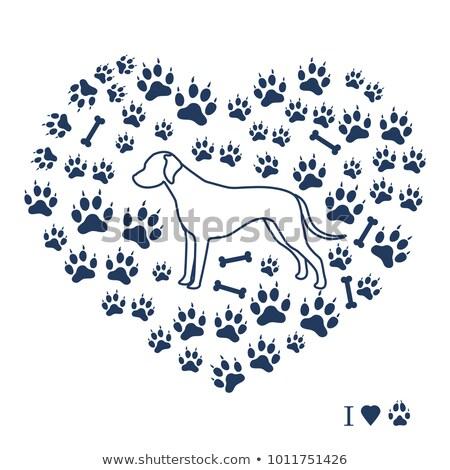 Dalmatian paw print Stock photo © cnapsys