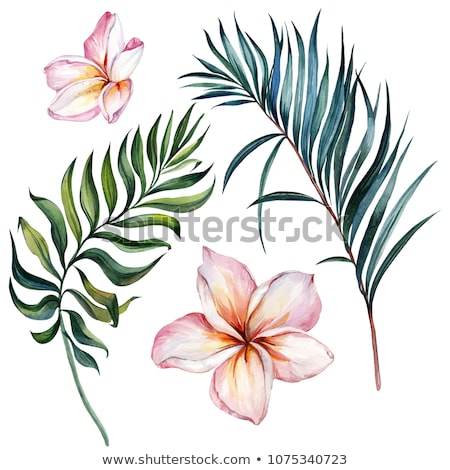 tropical plumeria flower on a large green leaf Stock photo © 808isgreat