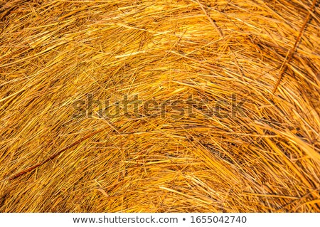 Golden field of ripe rye allow harvest Stock photo © vetdoctor