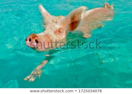 дружественный свинья глядя Сток-фото © Goldcoinz