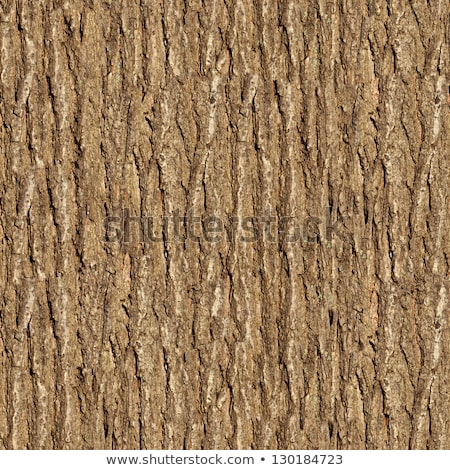 ニレ 樹皮 シームレス テクスチャ 自然 背景 ストックフォト © tashatuvango