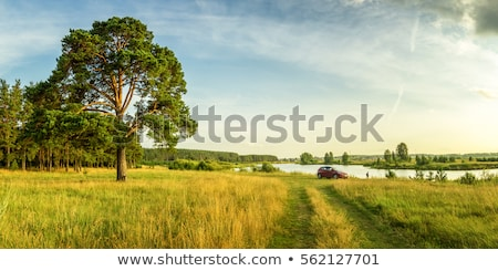 reed and river summer landscape Stock photo © goce