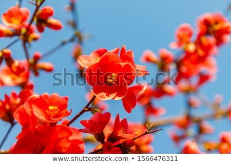 színes · virágok · labda · gradiens · háló · virág - stock fotó © adamson
