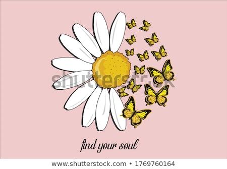 Stock photo: wild daisy and a fly