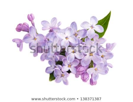 Roze witte bloem bloemen voorjaar Stockfoto © stocker