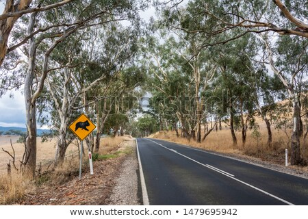highway crossing a spectacular fall forest stock photo © gophoto