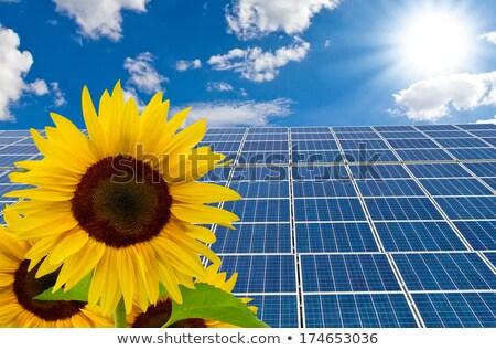 sunflower and solar cell Stock photo © njaj