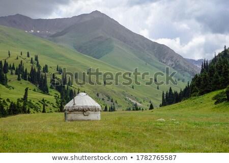 Stok fotoğraf: Kamp · park · Moğolistan · yeşil · hayvanlar
