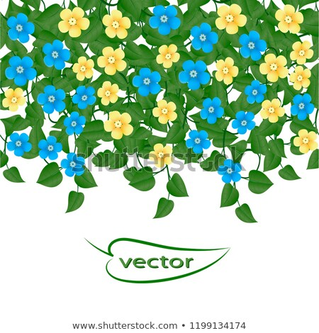 Amande lierre Bush arbuste floraison printemps Photo stock © EFischen