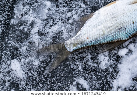 Pike tail on ice Stock photo © Mps197