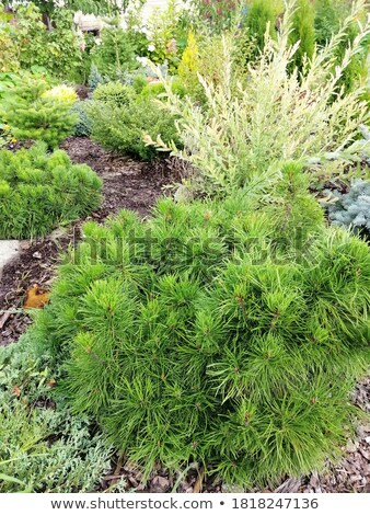 盆栽 · 画像 · いい · ツリー · 庭園 - ストックフォト © marimorena