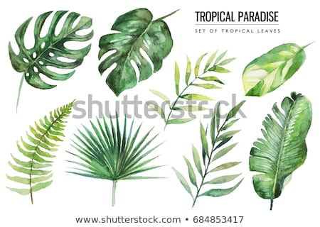 Vízfesték trópusi levelek fa erdő divat Stock fotó © gladiolus