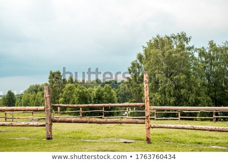 Horse and Cow in a Fence Stock photo © rhamm