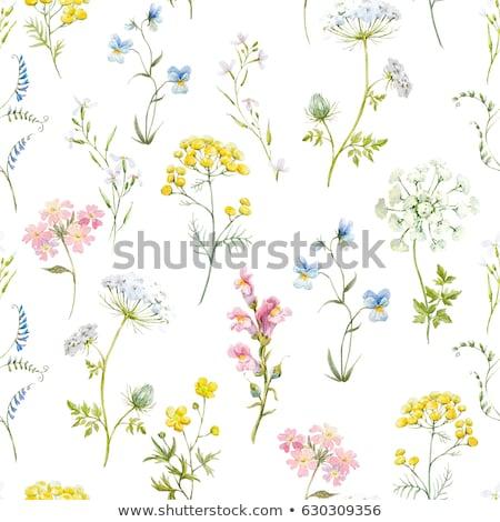 Spring geranium flowers Stock photo © suemack