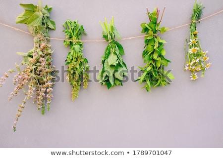 Bunch of herbs Stock photo © Fotografiche