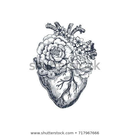 Red heart. Engraving illustration. Stock photo © gladiolus