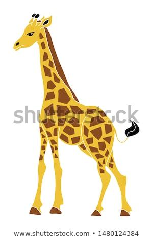 Giraffe Profile Stock photo © p0temkin