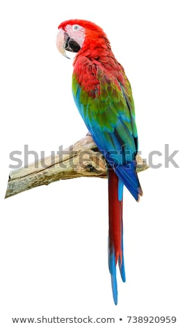 Colorful red parrot macaw isolated on white Stock photo © vlad_star