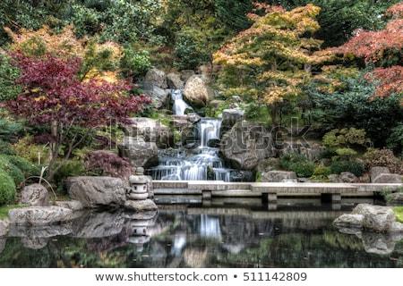 cachoeira · floresta · cristal · água · árvore · jardim - foto stock © photocreo