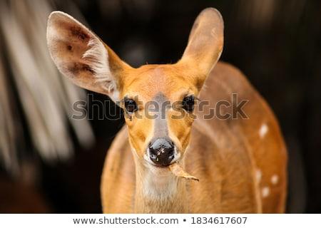 női · park · Dél-Afrika · állatok · fotózás - stock fotó © simoneeman