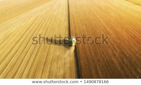 Aerial view of combine harvester harvesting wheat Stock photo © stevanovicigor