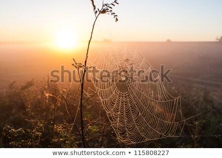 Nebel Tropfen Spinnennetz Natur Stock foto © pictureguy