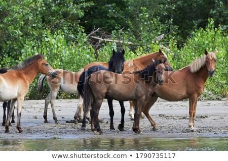 paard · lopen · afbeelding · vallen · paarden · ras - stockfoto © mady70