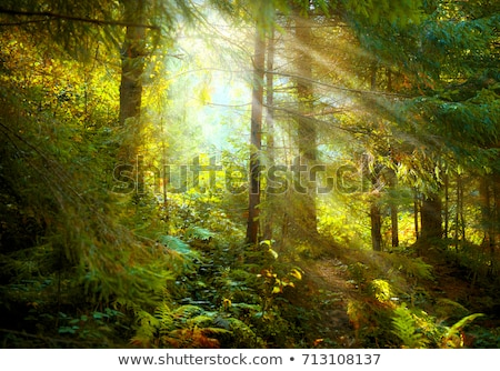 Old Forest Woodland with Sun Rays Stock photo © solarseven