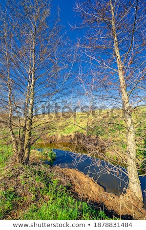 Small streams running down on hillside Stock photo © Mps197