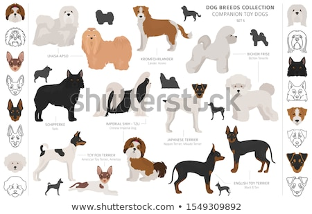 puppies shih tzu and spitz Stock photo © cynoclub