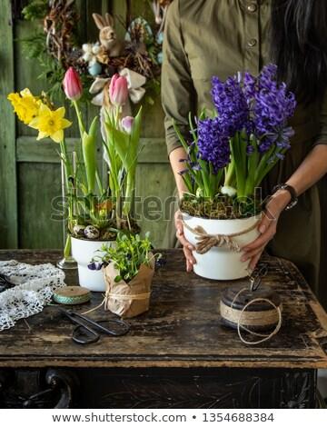 Mor çiçek çiçek yeşil yaprakları Stok fotoğraf © manfredxy